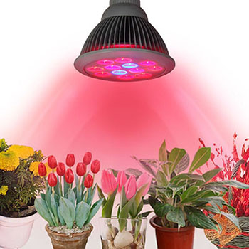Innoo Tech Plant Grow Light LED, 24- W Plant Bulb High Efficient LED Grow Lights