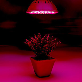 Bryt Lamps Plant Growing Light Bulb- LED Grow Lights for the Indoor Pant Cover the Spectrum