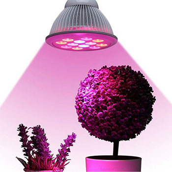 Lightness 15- W LED Plant Growing Lights, Full Spectrum Grow Bulb for the Garden Green- house Hydroponic Indoor Plant